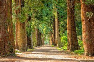 chemin éclairé avec arbres verts
